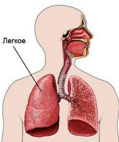 Atelectazie - patologia plămânului