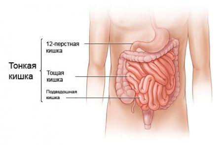 structura intestinală