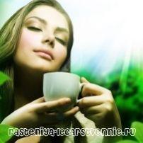 Чай: полезни свойства и противопоказания