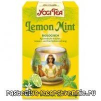 Чай с мента: ползи и вреди, рецепта, полезни свойства