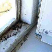 Црна, зелена мувла во куќата - како да се бориме за тоа?