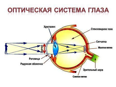 Што е визуелна анализатор: структура и функција