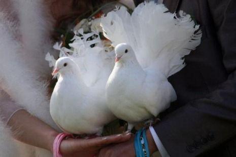 Гулаби на свадба: мода или традиција?