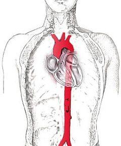 Conducerea aortei toracice la om