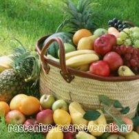 Горски плодове, зеленчуци, плодове - здравословни продукти