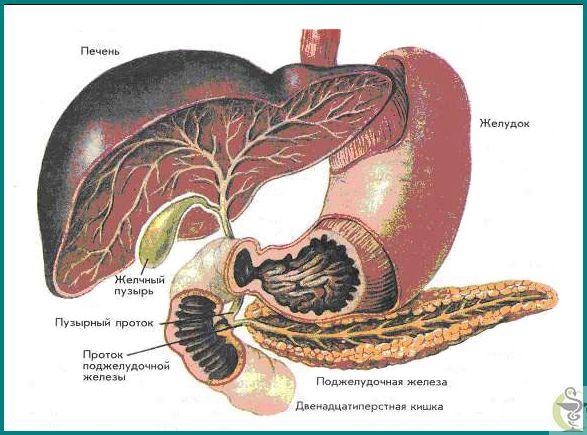 Jak k léčbě chronické pankreatitidy a to, co nazval