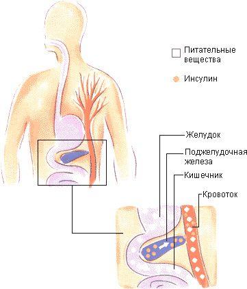 insulină