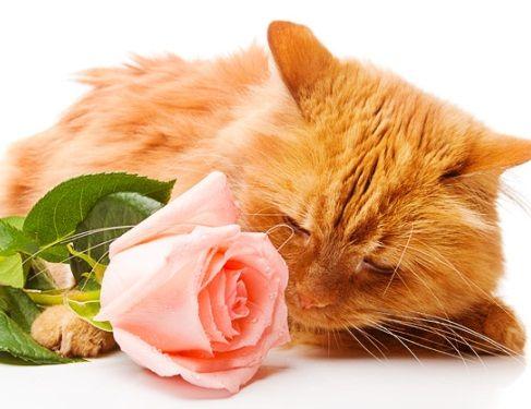 Како да се отстрани мирисот на мачка урина?