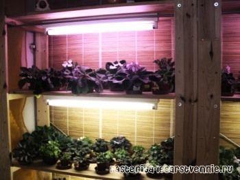 Кои светилка е најдобро за растенија за сите нив во текот на годината се зголеми?