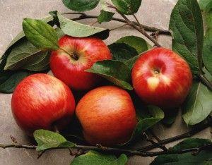 Към вредните ябълки