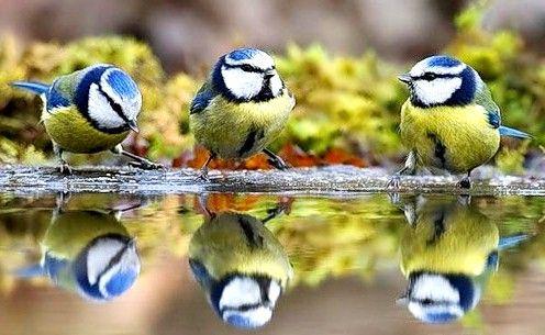 Hraneste păsările - face bine