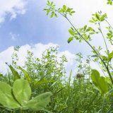 Лечебните растения са противопоказани по време на бременност