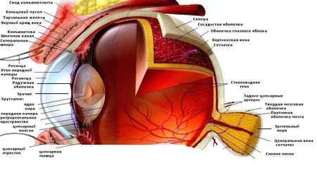 Описание Диагностика - Vision 0.75