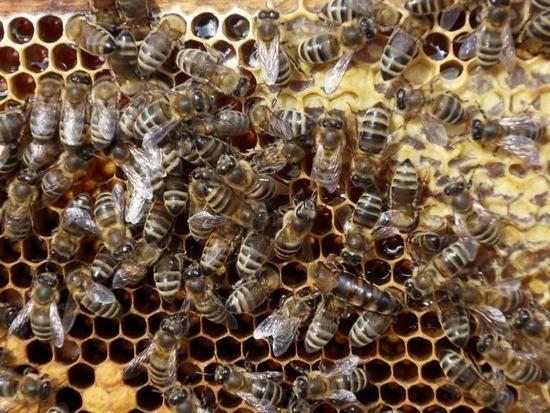 Bee Podmore: ползи и вреди невероятен продукт