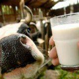 Полезните качества на млякото за тяло