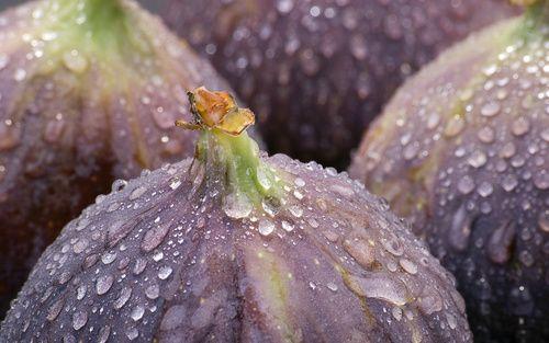 Придобивките и штетите од смокви