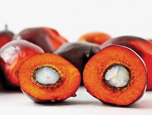 Придобивките и штетите на палминото масло