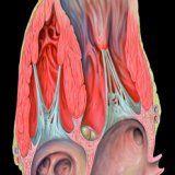 Рисковете, свързани с аневризма на сърцето