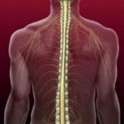 compresia maduvei spinarii: simptome, cauze, tratament