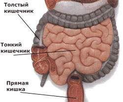 intestinului anatomie