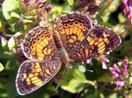 Învață de la natură. Butterfly.