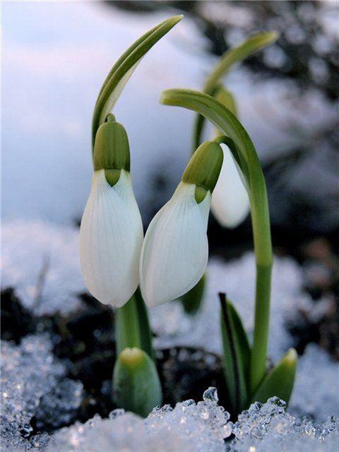 De primăvară: Reînnoirea lumii - Actualizarea în sine