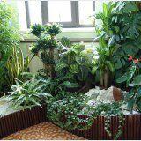 Видове вътрешни лечебни растения