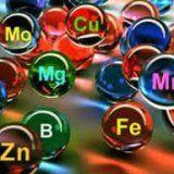 Витамини и минерални вещества в организма