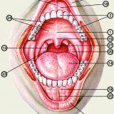 Защитни механизми устната
